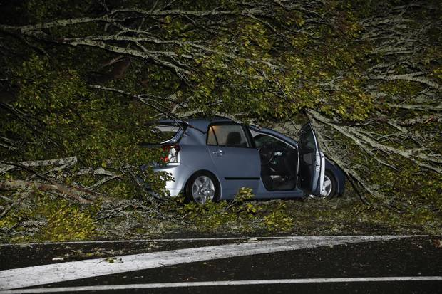 A woman was trapped in a car after it was hit by a fallen tree in New North Rd, Kingsland, Auckland. Photo / Dean Purcell