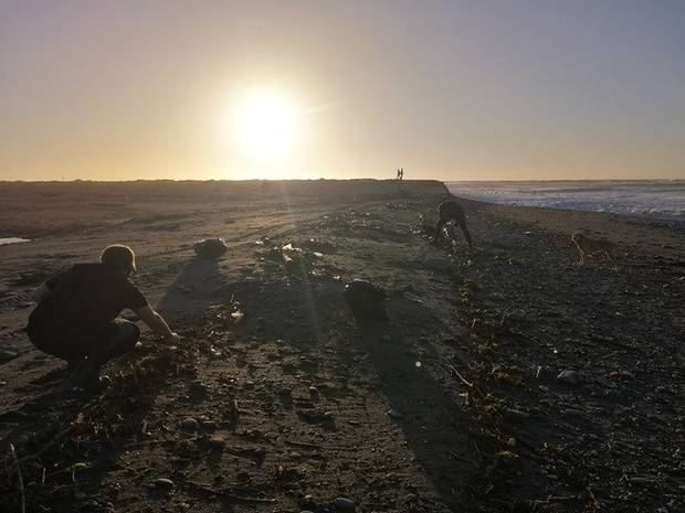 Locals pick up rubbish left strewn along the Waiho River. Larger pieces of rubbish were washing up on beaches south of Waiho. Photo / Mike Bilodeau