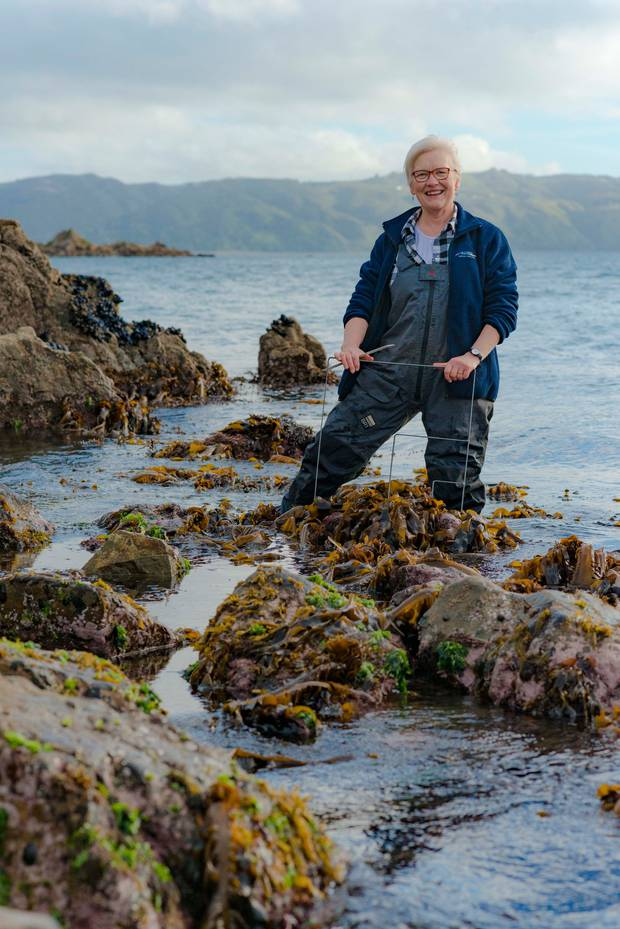 Kiwi scientist's study looking at using seaweed to store carbon