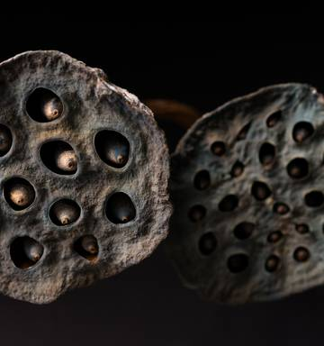 Trypophobia Why These Simple Images Are Freaking People Out Nz Herald