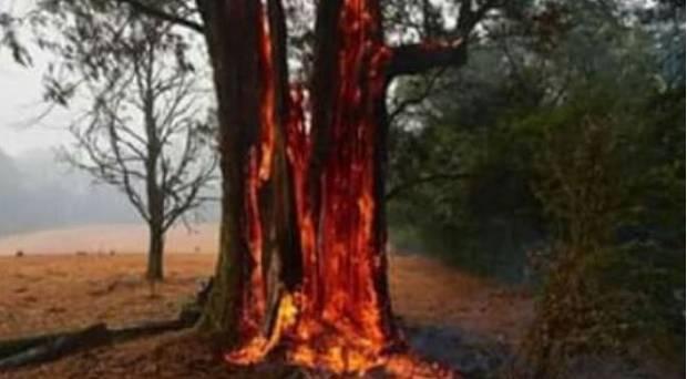 Es wird behauptet, dass dieses Bild (unbekannter Herkunft) beweist, dass Bäume von innen entzündet wurden.  Foto / geliefert
