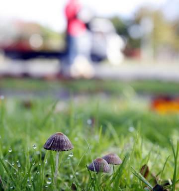 Can magic mushrooms cure schizophrenia? - NZ Herald