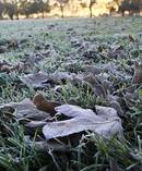 Much of the South Island and central North Island is cloaked in frost after temperatures plunged below zero overnight. Photo / File