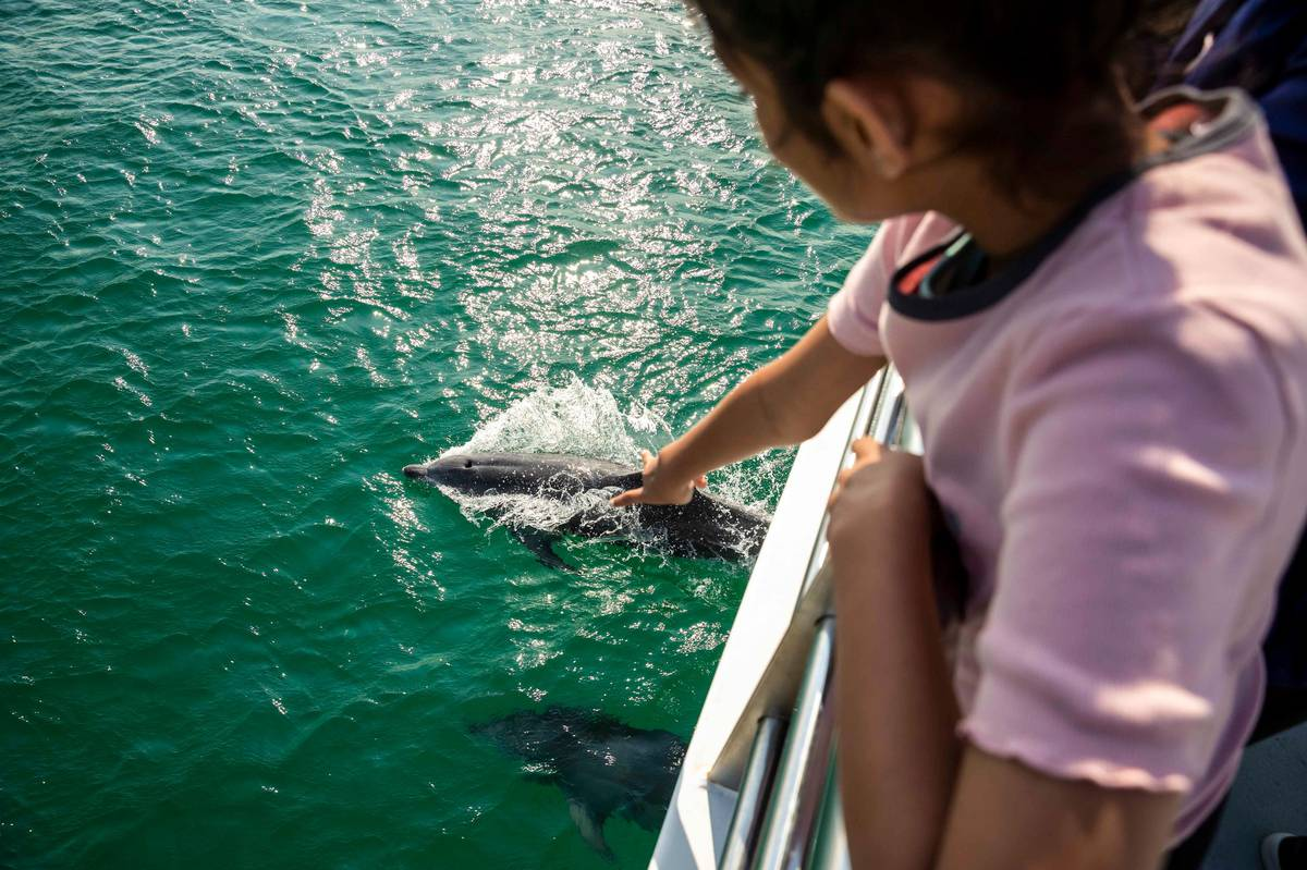 Travel: Plan ahead for wild holidays in Sydney and New South Wales