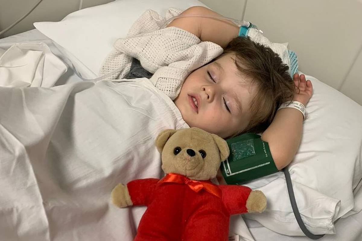 Three-year-old 'temporarily paralysed' after he is bitten by snake during family picnic