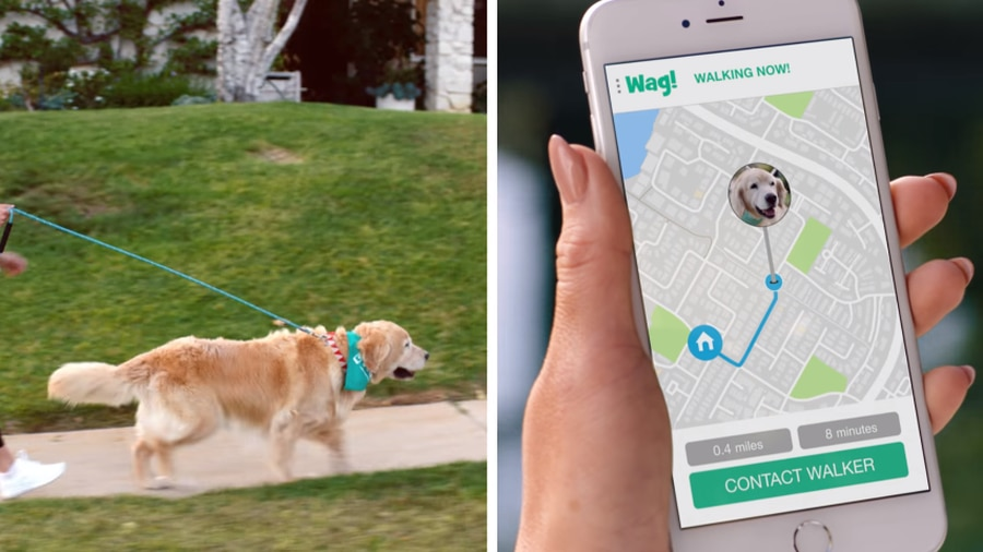 Wag! Raises $300M Investment from SoftBank Vision Fund