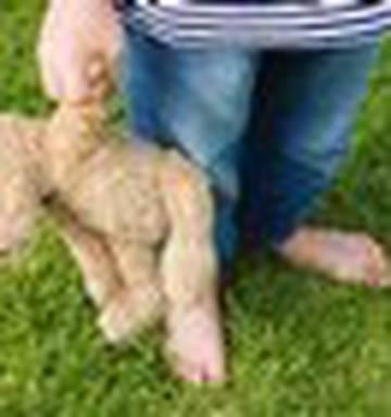 Freezing soft toys before washing combats dust mites - NZ Herald