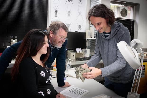 Drs Vanesa De Pietri, Paul Scofield and Gerald Mayr examine a Crossvallia waiparensis fossil at Canterbury Museum. Photo / Canterbury Museum