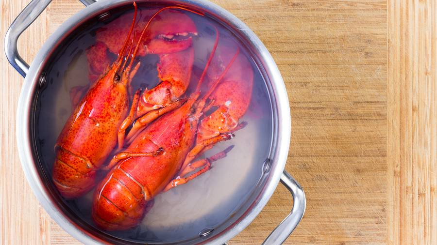 Switzerland bans boiling lobsters alive