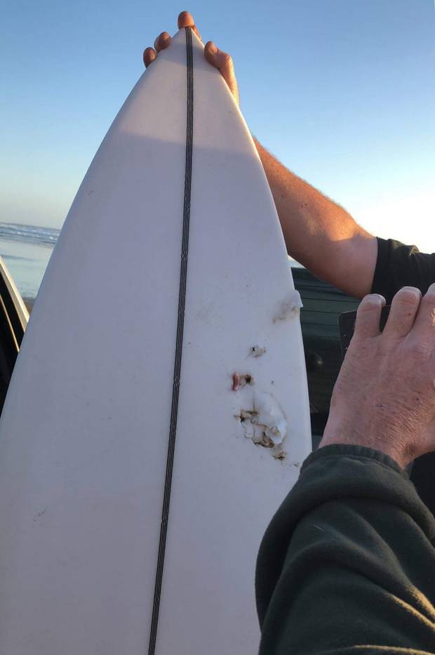 Teeth marks in the surfboard of the man who was attacked by a shark off Baylys Beach near Dargaville. Photo / India Williams