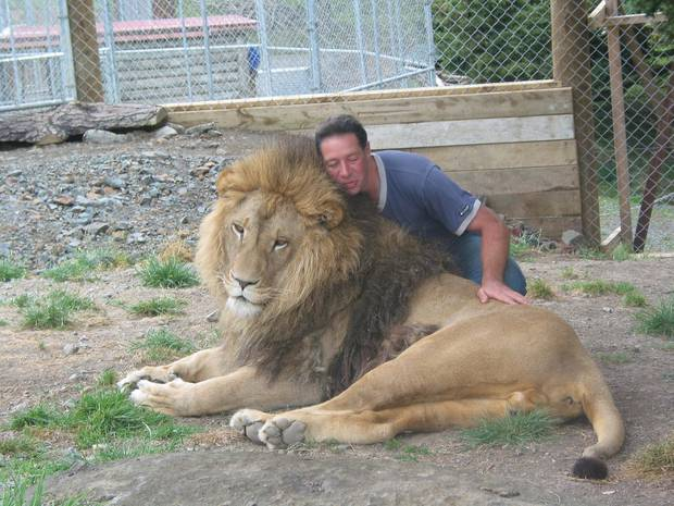 Lion Man Craig Busch up close and personal with one of his pride of big cats in 2003. File photograph