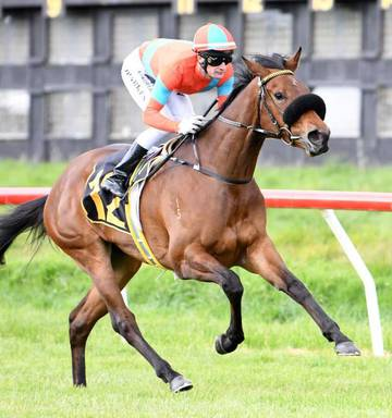 6e078a964 ... Exciting filly Miss Labasa is in full stride under the urgings of jockey  Johnathan Parkes