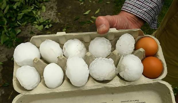 An egg tray shows the scale of some of the hailstones. Photo / Luke McGoldrick