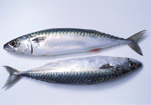 Mackerel is high in amino acids. Photo / Getty Images