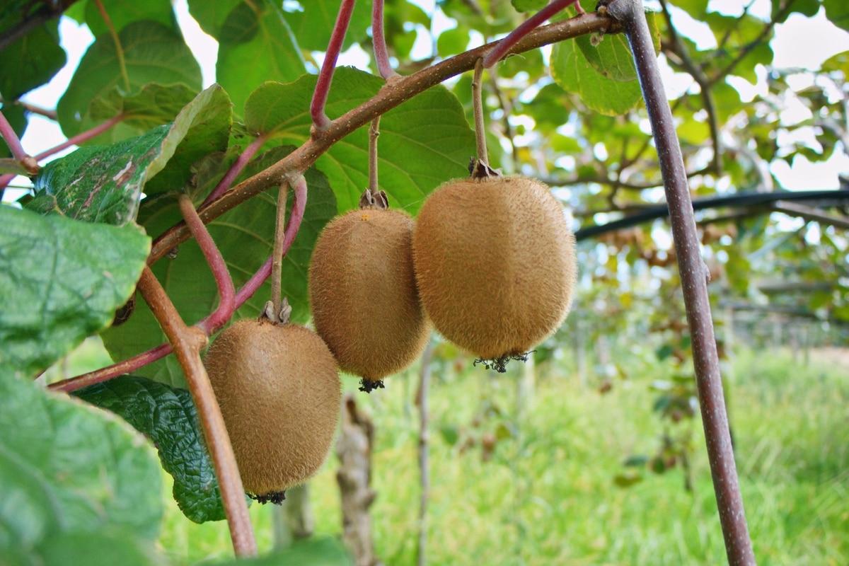 Northland horticultural sabotage leads sought