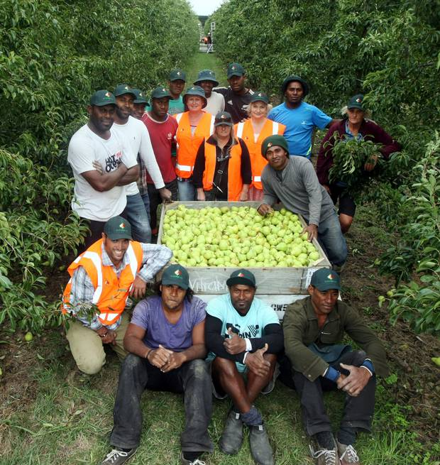 Fijian RSE workers and RJ Flowers Ltd staff at an orchard in Twyford. Photo / Paul Taylor