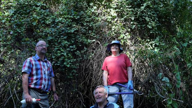 Eradicating old man's beard in Whanganui in 2014 were (from left) Horizons pest plant officer Neil Gallagher, Horizons councillor Rod Pearce and volunteer Ann Handley. Photo / Stuart Munro