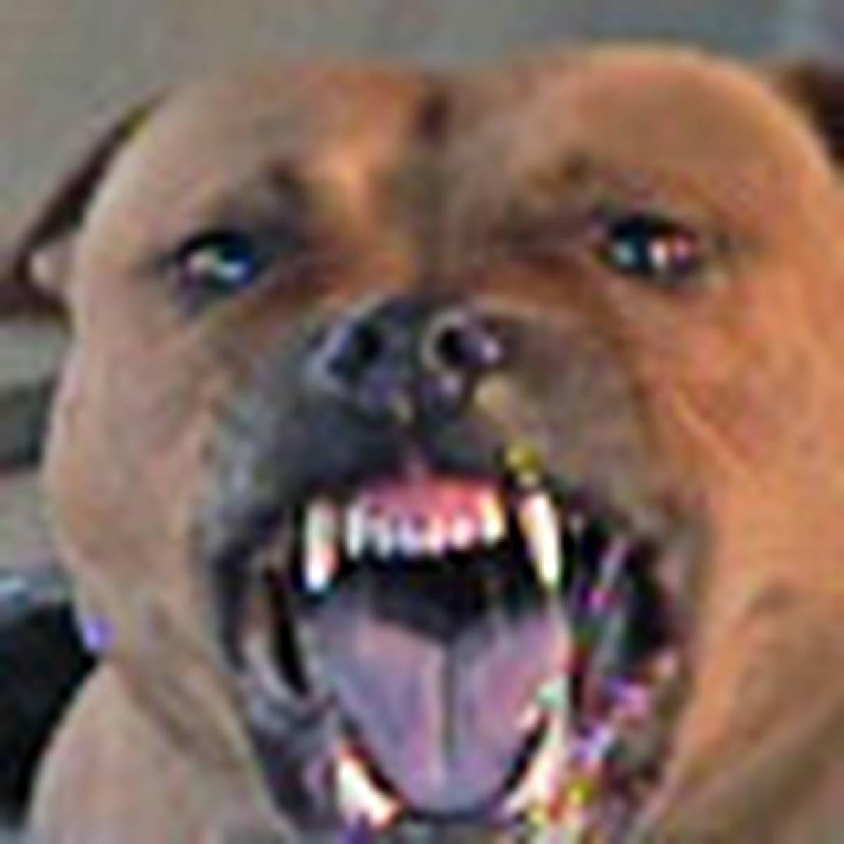Terrier dies after saving children from pitbulls - NZ Herald