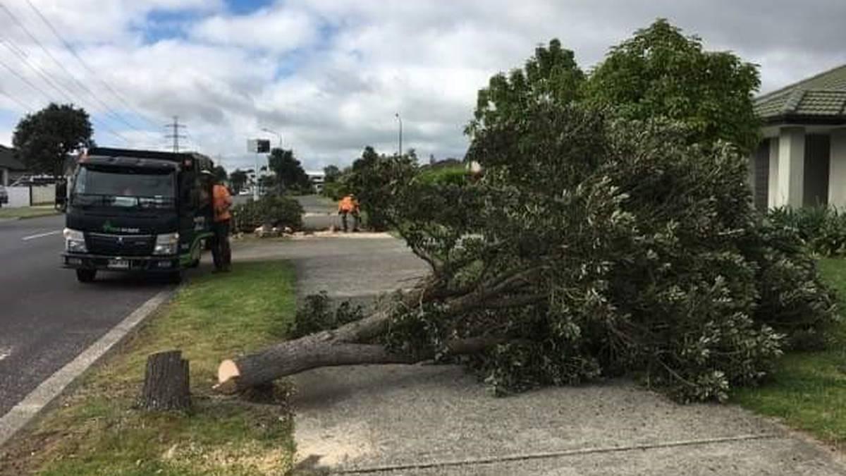 Karaka chainsaw massacre: Carnage as native Christmas trees chopped down on suburban street - NZ Herald