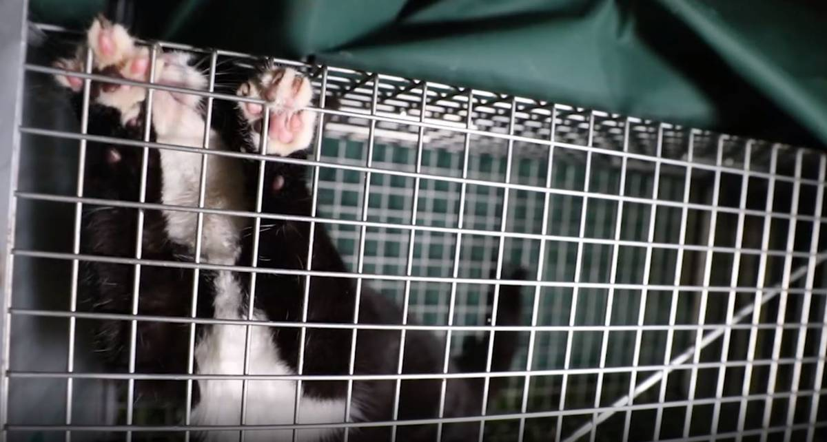 88 cats euthanised by Auckland Council since March as activists fork out thousands to desex strays