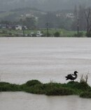 Northland felt the first sting of the story with flooding in Kaeo. Photo / Peter de Graaf