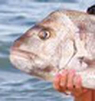 NEW BITE ME FISH FISHING SPORT CAP HAT RED