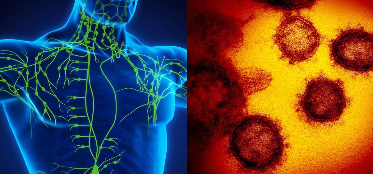 Big Read: Coronavirus vs the incredible human immune system