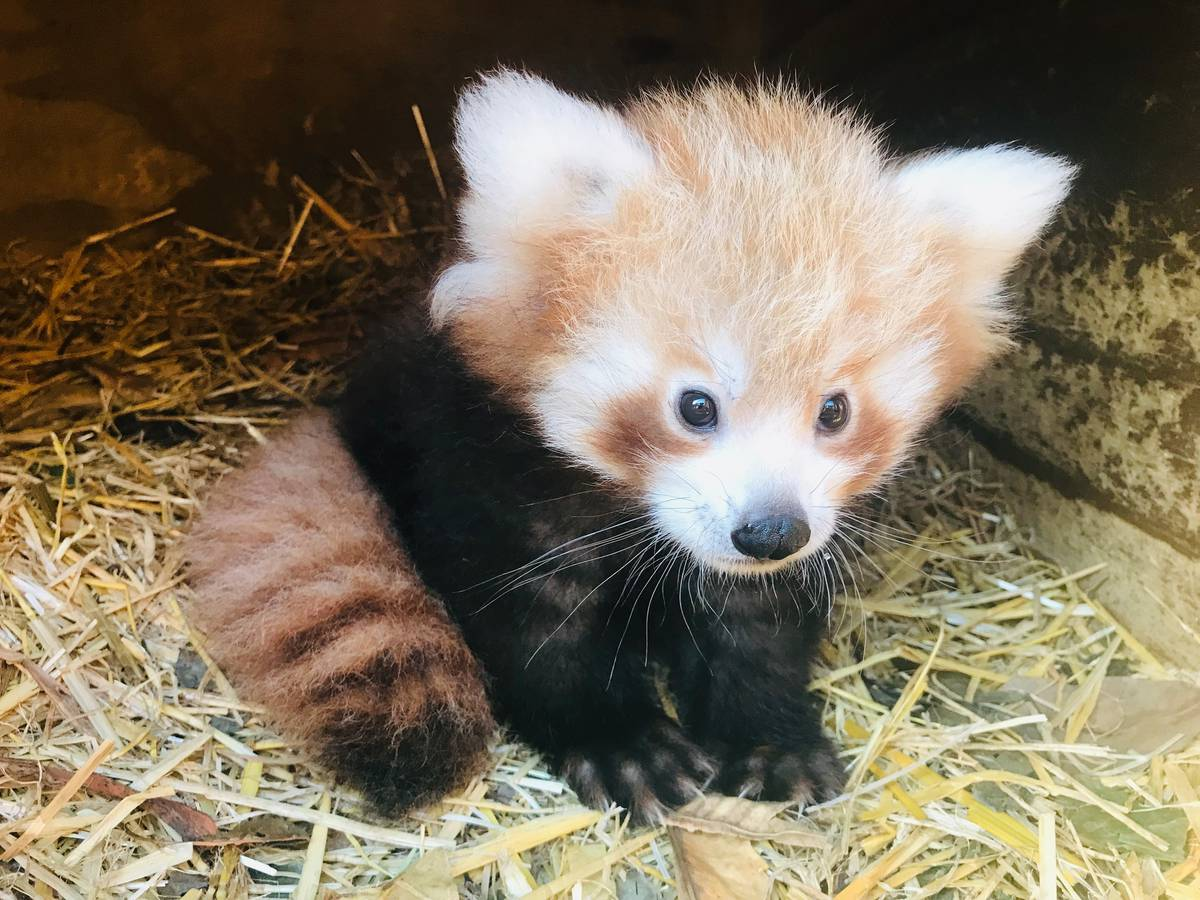 The Cute Curious And Cuddly Babies Born At Our Zoos This Year Nz Herald