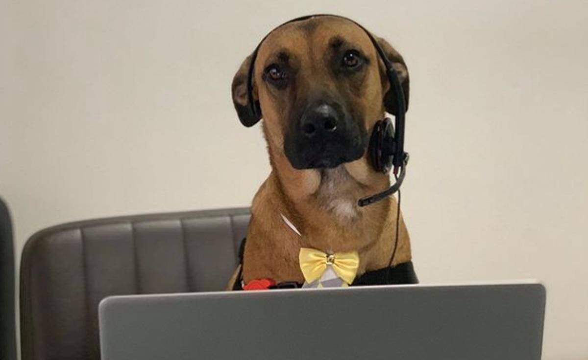 Stray dog adopted as Brazilian car company mascot thumbnail