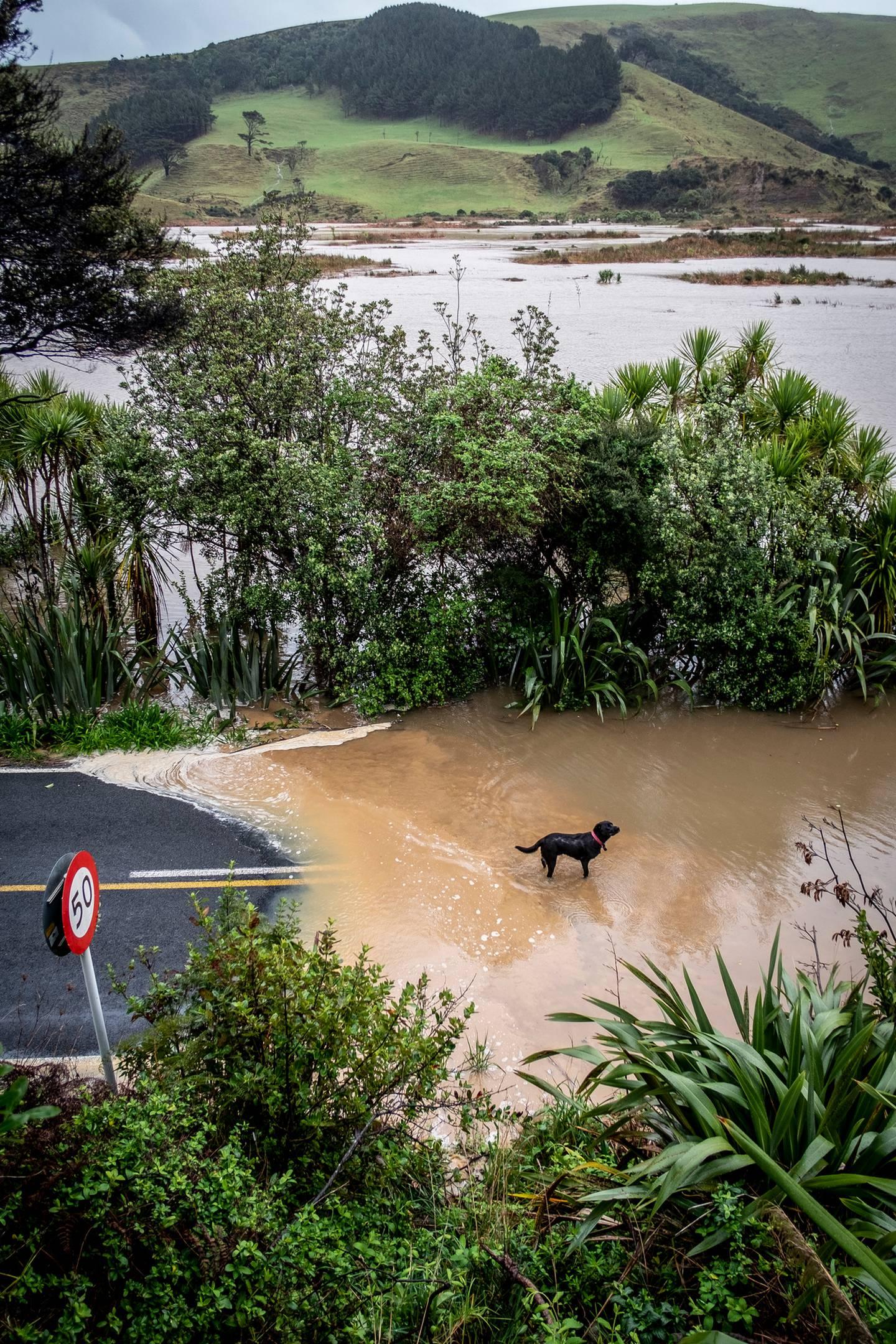 Heavy rain caused flooding of Te Henga and Bethells Rd. Photo / Michael Craig