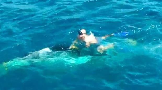 Django rescuing the whale calf. Photo / Envoy Cull