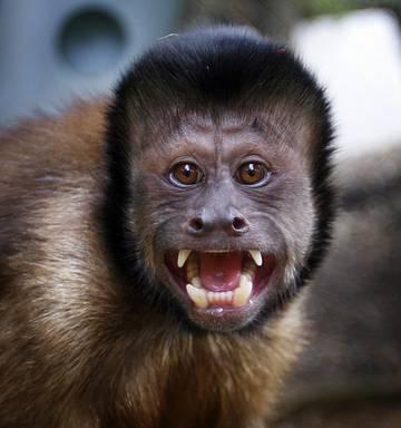 Frank Greenall: Cucumbers, grapes and monkeys - NZ Herald