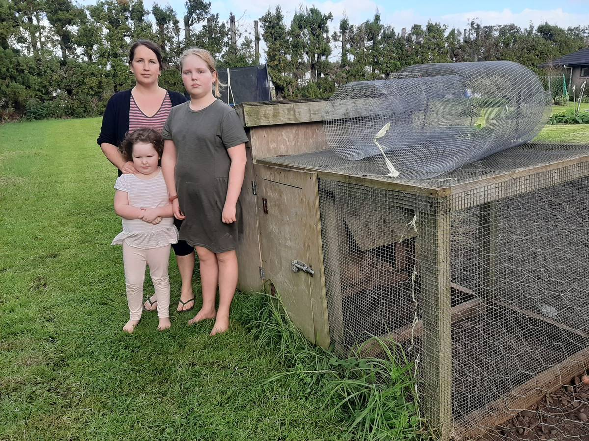 Roaming dogs kill family's chickens during three separate attacks in Northland