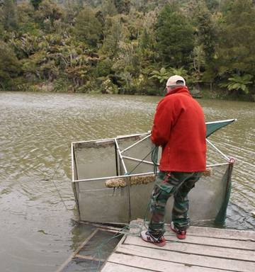 Fishing: Break out the net - it's time to dine like kings