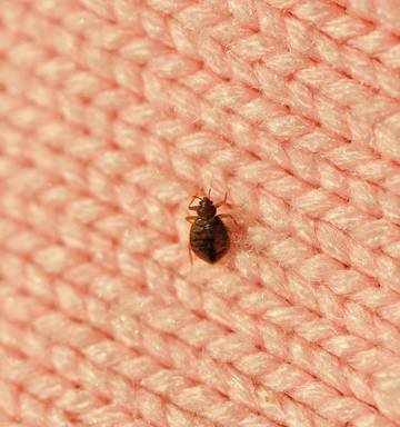 Woman Leaves 10 Homeless In Attempt To Kill Bed Bugs Nz Herald