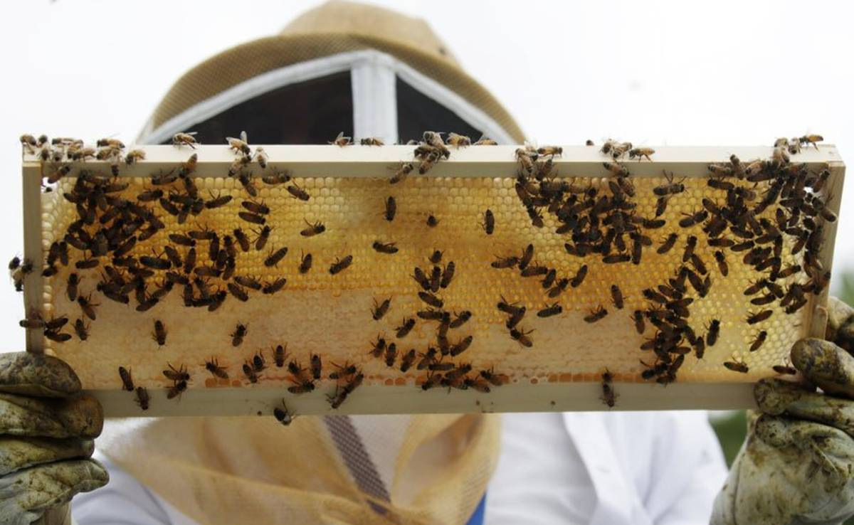 Honeybees & Beekeepers, Information. cover image