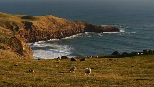 The teen was fishing with a group at Papanui Point when he was swept off the rocks.