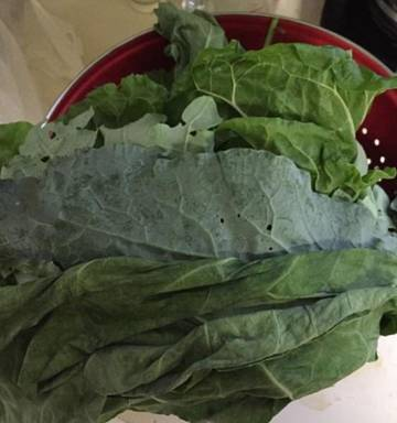 He's a keeper': Man gives vegan woman bouquet of kale on
