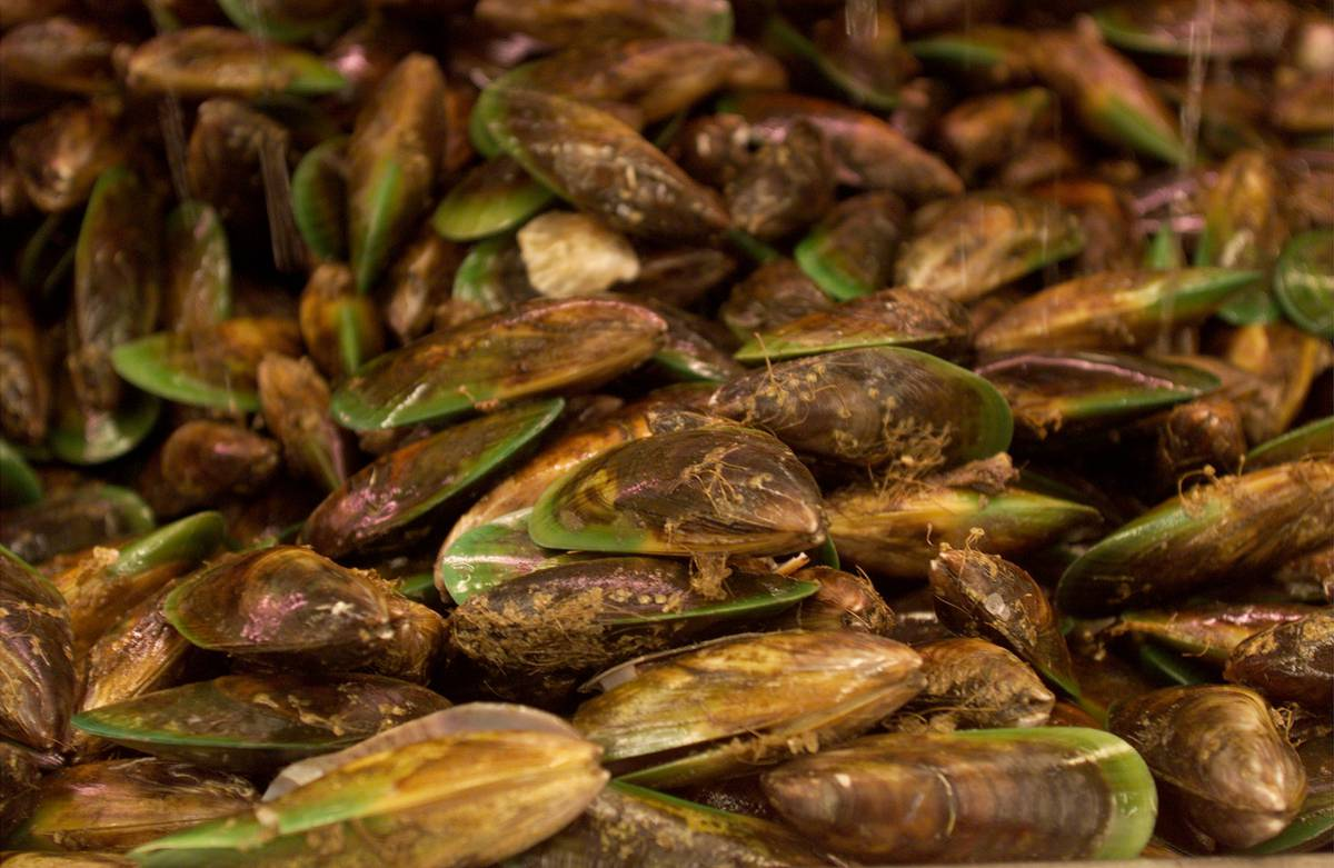 Microplastics found in NZ green-lipped mussels