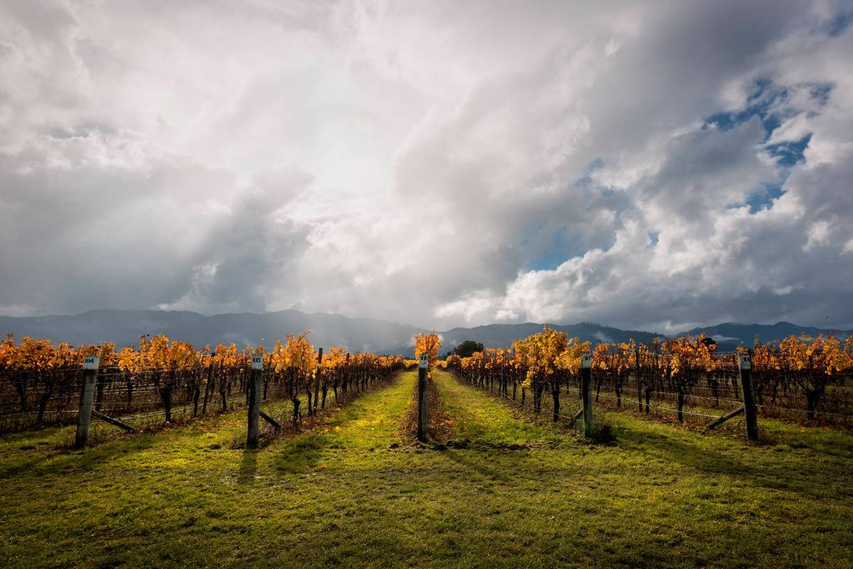 How to tour a New Zealand vineyard from the comfort of your couch
