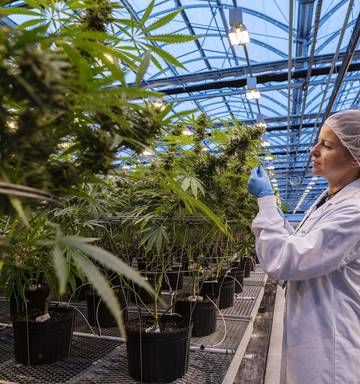 Brian Gaynor: Future looking dope for global cannabis sector