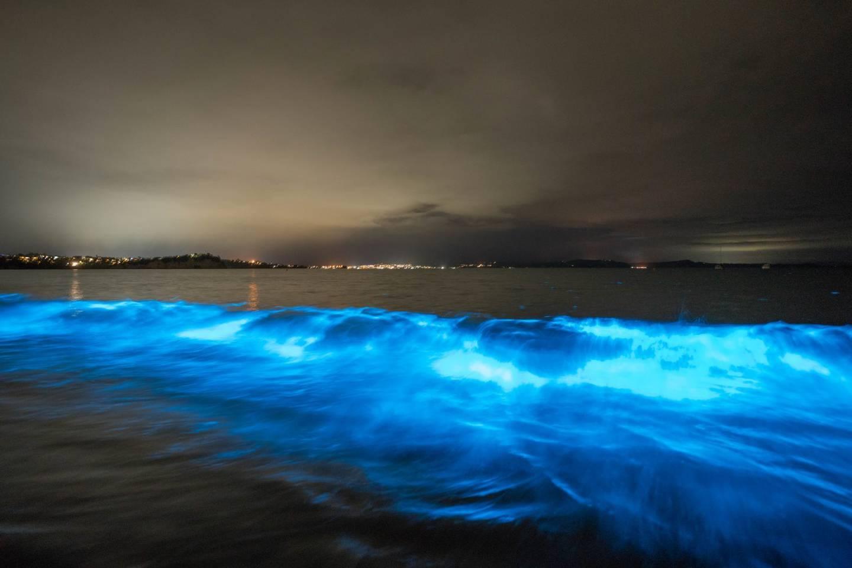 Bioluminescent display at Tindalls Beach on Sunday night. Photo / Matthew Davison