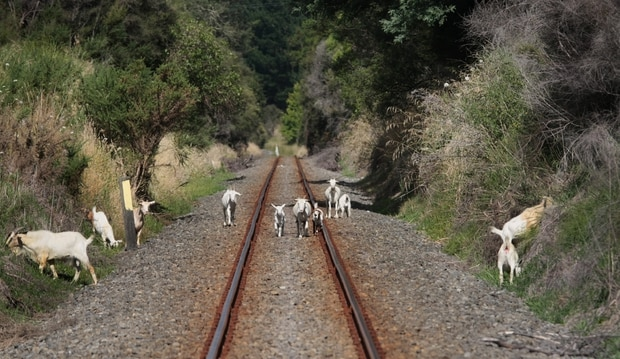 NZ First wants to reopen the Napier to Gisborne rail line.