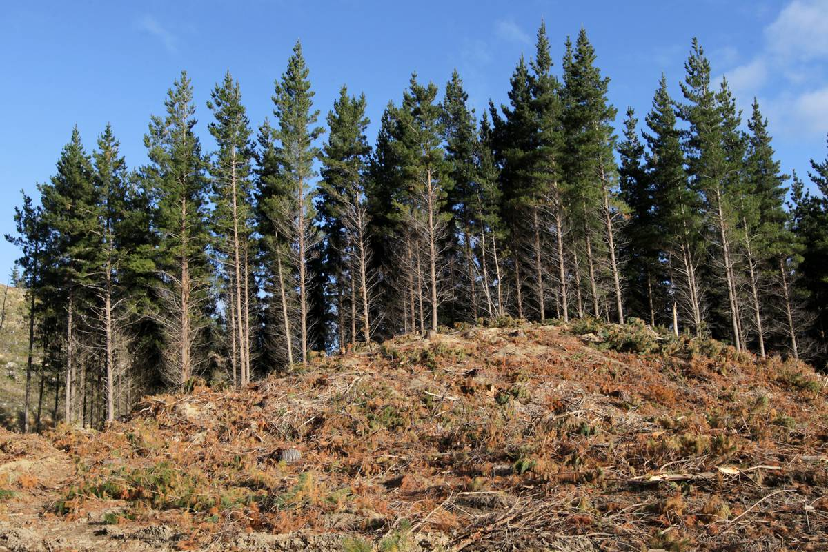 DNA feat could boost star forestry species
