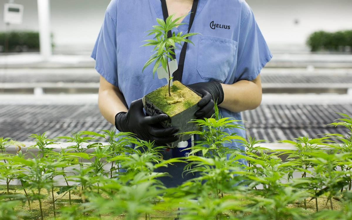 Marijuana watch: Latest poll shows legalisation vote on a knife edge - RapidAPI
