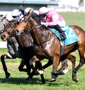 Racing: Rain changes Ellerslie odds - NZ Herald