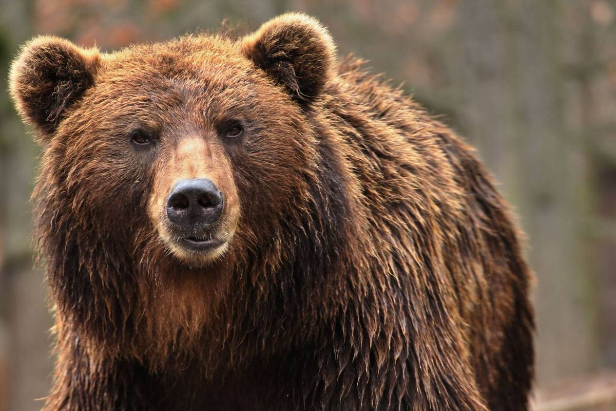 Animal rights groups call for full investigation before bear execution
