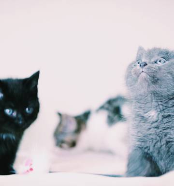 Meow! 'Uber kittens' coming to Auckland, Wellington - NZ Herald