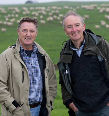 New dairy sheep breed the Southern Cross takes off - NZ Herald