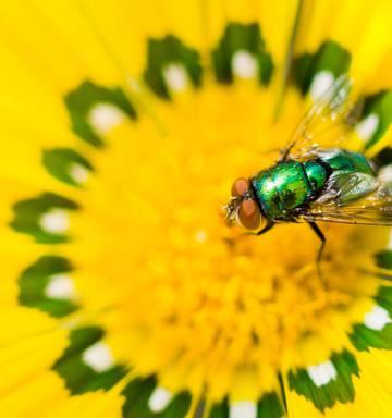 Flies With Flowers Nz Herald
